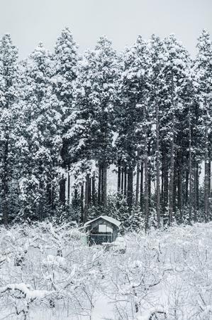 冬、東北、日本の青森森林が白い雪に覆われています。