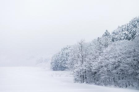 白い雪に覆われた風景と冬、東北の青森の森