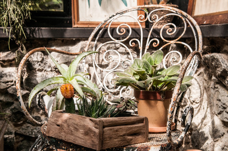 Cactus, plants pot and decoration ornaments on iron chair in vintage  greenhouse