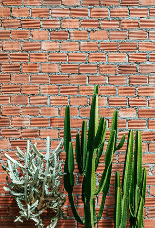 A Group of various cactus with sharp spike and old red brick wall vertical image with copy space