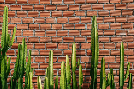 Faux pillar cactus with sharp spike and old red brick wall horizontal  image with copy space