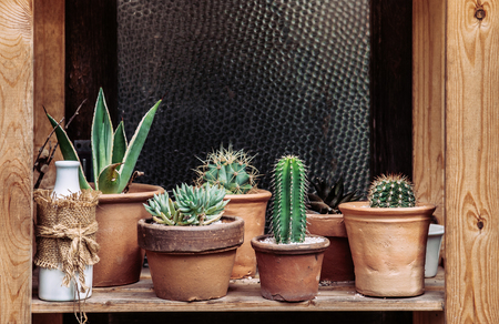 Vintage decoration various old cactus pots on wooden shelf and ornaments 写真素材