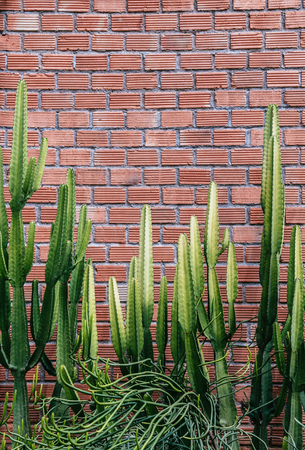Group of various cactus, agave with sharp spike and old red brick wall vertical image with copy space 写真素材