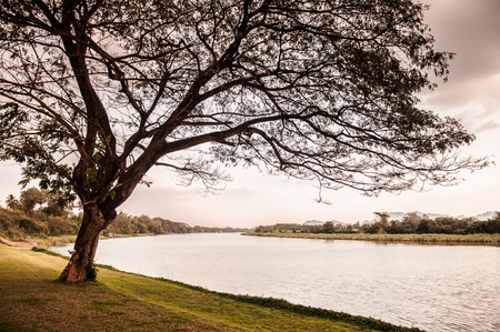 Horizontal shot of big rain tree or acacia tree in park by the river at evening or morning with warm sunset or sunrise light