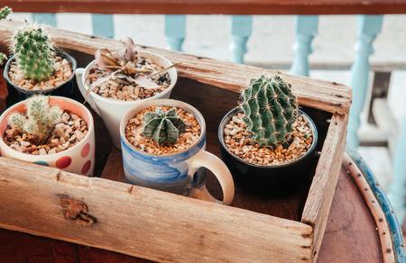 Decoración vintage varias macetas de cactus en caja de madera vieja en la mesa cerca de tiro Foto de archivo - 97488082