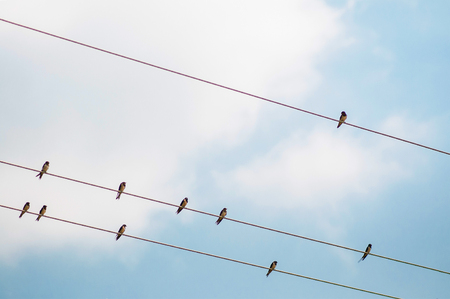 Group of small martin swallow Birds on the electricity wire against blue sky