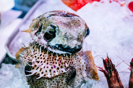 JAN 28, 2018 Naha, Okinawa, JAPAN : Local Fugu or pufferfish in First Makishi Public fish and seafood Market