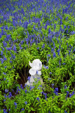 Violet flowers or lavender field in spring season with white cupid sculpture 写真素材