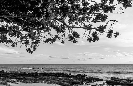 silhouette Dramatic evening at Rock beach under the tree at Nui beach on Koh Lanta, Krabi, Thailand