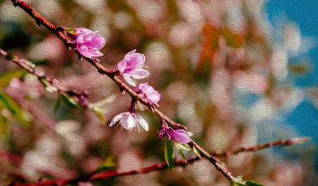 illustration image water colour style Fresh cherry blossom on its branch in spring season with blurry background. Fresh nature flower concept