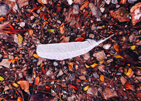 White bird feather on soil ground illustration graphic art colourful dry leaves - nature graphic wallpaper concept