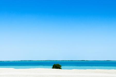 White Sand beach blue sea with green bush. Yas island - Abu Dhabi nature landscape skyline under bright sunlight