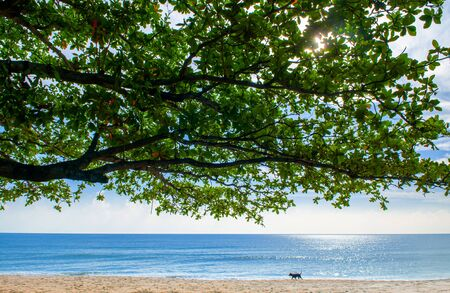 Summer tropical beach with tree branches and dog walking - Thailand tropical isalnd beautiful nature scenery