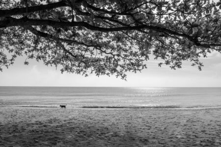 Summer tropical beach with tree branches and dog walking - Thailand tropical isalnd beautiful nature scenery black and white