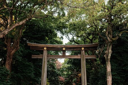 Large grand historic Wooden Torii gate under big trees - Most important shrine and city green space of Japan capital city. Stock Photo