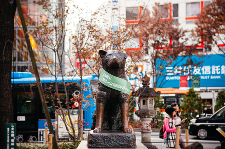 Tokyo, Japan - DECEMBER 5, 2018 : Hachiko memorial statue with cute cats, Akita dog which famous for loyalty to his owner until death at Shibuya Station. Famous tourist spot and meeting point. Редакционное