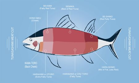 Tuna Sashimi Meat cut guide chart with meat part name in English and Japanese, Graphic vector editable pencil drawing line style with pastel soft colours