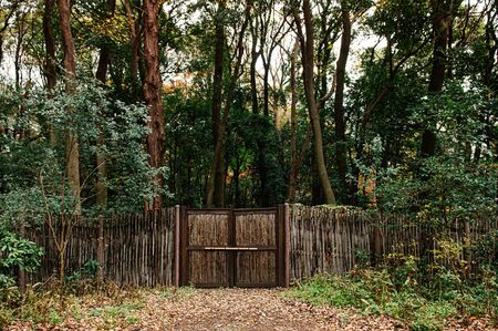 Old wooden bamboo fence with gate in lush green forest under very high trees - Tokyo green space