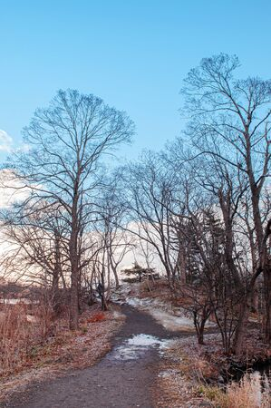 Onuma Koen Quasi -National park nature trail in peaceful cold winter with dried leafless tree. Hakodate, Hokkaido - Japan.