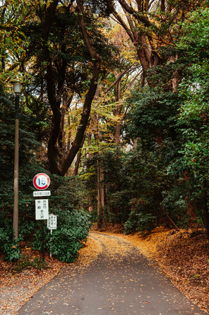 DEC 5, 2019 - Tokyo, JAPAN - Autumn Yellow Ginkgo fallen leaves covered ground and small empty road in lush green forest at Meiji Jingu Shrine park - Tokyo green space