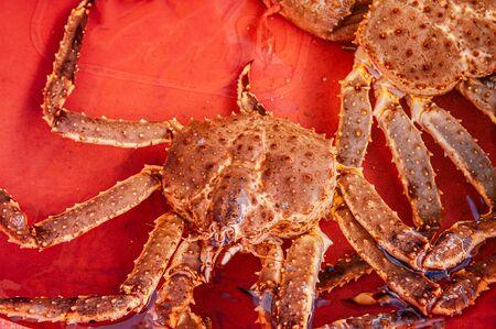 Live Japanese king crabs or Taraba at Hakodate Asaichi fish market Hokkaido. Top view live fresh seafood shot Stockfoto