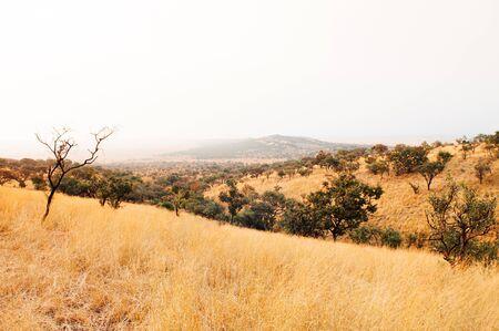 Serengeti Grumeti Reserve wildlife park grass field on beautiful slope of mountain hill under evening warm dramatic light