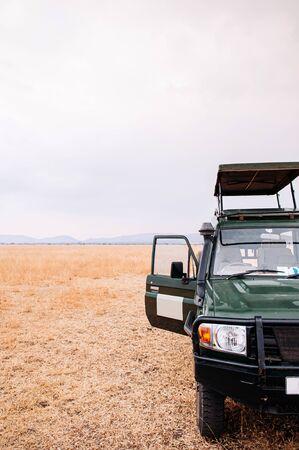 cars Safari truck in golden grass field of Serengeti Savanna forest in Tanzania - African safari wildlife watching trip