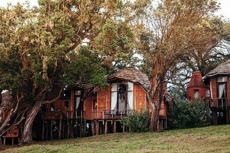 JUN 25, 2011 Tanzania - Luxury clay house African primitive cottage villa with thatched roof in garden under big tree - Ngorongoro Serengeti Savanna