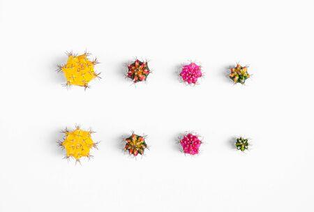 Verschiedene Farben und Größen Gymno oder Gymnocalycium Kaktus Spross Schneiden für die Vermehrung isoliert auf weißem Hintergrund