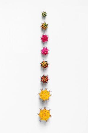 Verschiedene Farben und Größen Gymno oder Gymnocalycium Kaktus Spross Schneiden für die Vermehrung isoliert auf weißem Hintergrund Standard-Bild