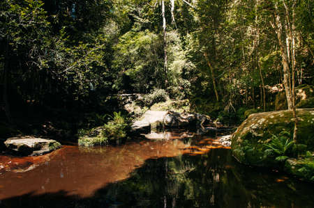 Beautiful silhouette High contrast shadow and curvy water stream in tropical forest at Phu Kradueng National park, Loei - Thailand Фото со стока
