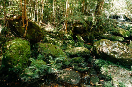 Very green lush tropical forest moss growing on stones with small water stream - Good environmental and pure nature