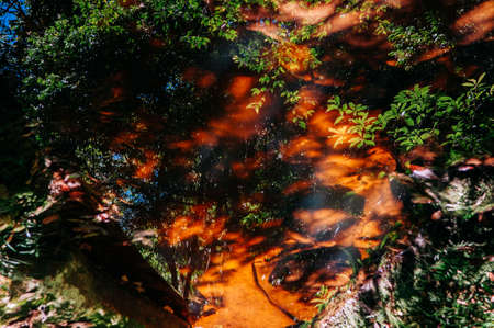 Beautiful silhouette tree leaves shadow reflected on water stream surface in tropical forest at Phu Kradueng National park, Loei - Thailand