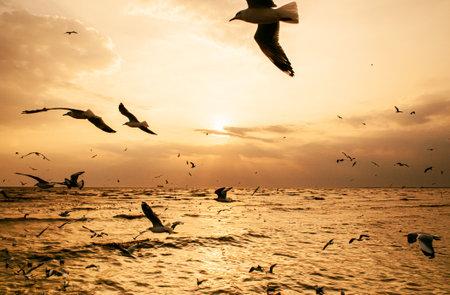 Large flock of Seagull birds flying over peaceful sea at dramatic sunset at Bang Pu in Samut Prakarn near Bangkok - Thailand Фото со стока