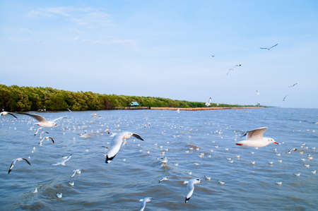 Large flock of Seagull birds flying over peaceful sea in evening at Bang Pu in Samut Prakarn near Bangkok - Thailand Фото со стока