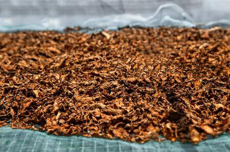 Sun dried Turmeric rhizome fresh Tumeric roots herbal medicine plant under bright sunlight - Close up details