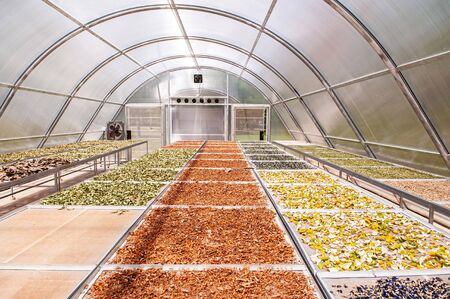 Colourful herbs in Solar dryer greenhouse for drying food and herbs ingredient or agriculture products by sunlight heat.