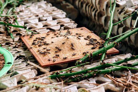 Cricket edible insect farming alternative food exotic local bug farming in Thailand
