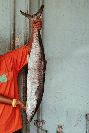Whole Salted mackerels fish or Pla Insee Kem in local fisherman hands. Thailand Seafood preservation