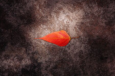 Red Autumn leaf on dark coloured stone surface with light spot on leaf. Season change background concept