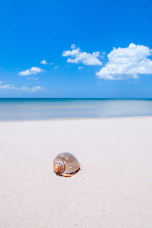 Beautiful seashell on tropical island beach with blue sky and clouds in summer, beach getaway vacation destination. Banque d'images