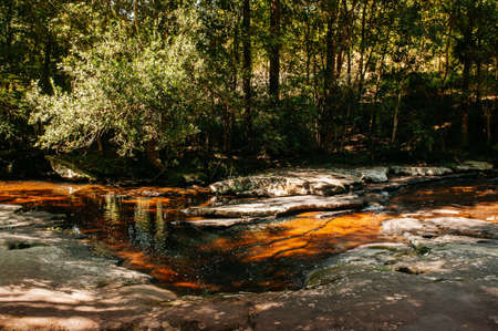 Beautiful silhouette tree leaves shadow reflected on curvy water stream surface in tropical forest at Phu Kradueng National park, Loei - Thailand