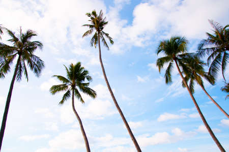 Group of Tropical coconut tree against blue sky, summer vacation exotic island concept