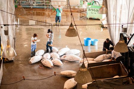 JUN 26, 2014 Kanagawa, Japan - Buyers examine frozen tuna for Japanese Tuna auction in fish market - Misaki Port fish market