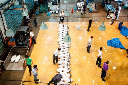 JUN 26, 2014 Kanagawa, Japan - Buyers examine frozen tuna lined up for auction. Japanese Tuna auction in fish market - Misaki Port fish market
