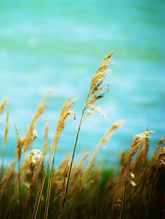 Grass beside the water