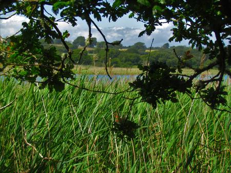 Grass marshlands on Isle of Wight Causeway