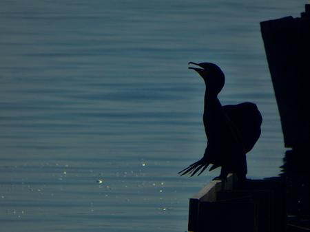 Cormorant silhouette landscape