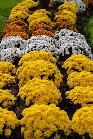 Rows of various flowers in a garden Banco de Imagens