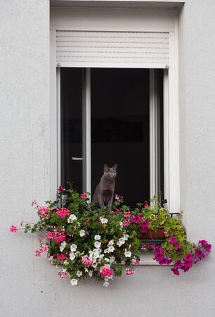 Cat siting at window which has flowers and looking Stock fotó - 138014229